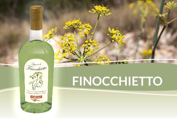Amarischia Finocchietto